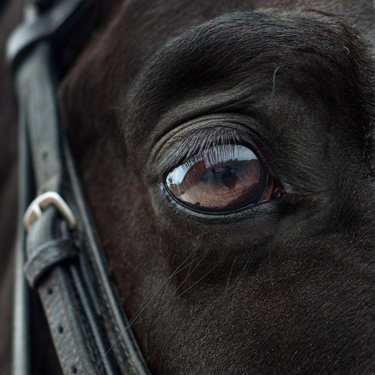 horse, eye, mirror